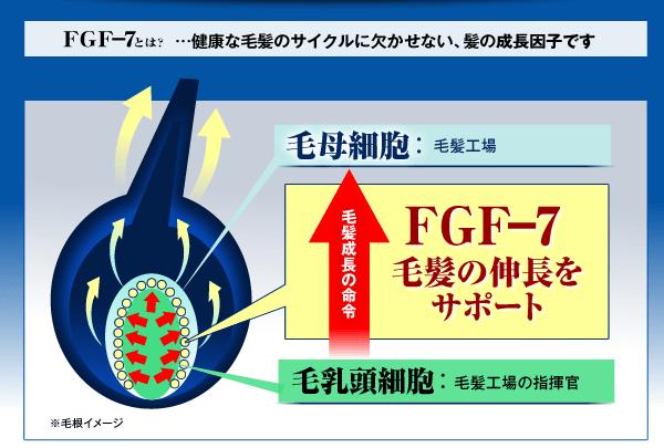 FGF-7の育毛効果とオススメの超激安な育毛剤を紹介!